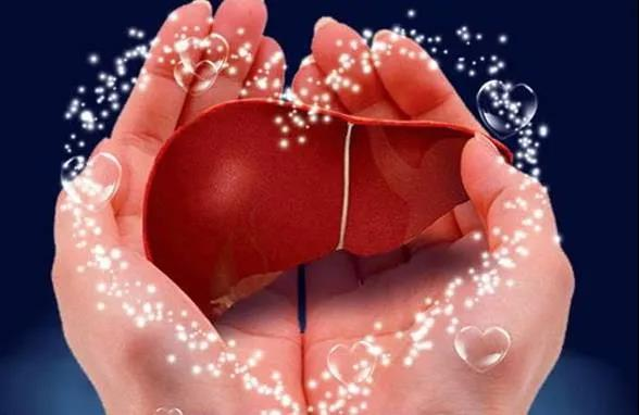 水蛭素、护肝日、肝脏肾脏疾病