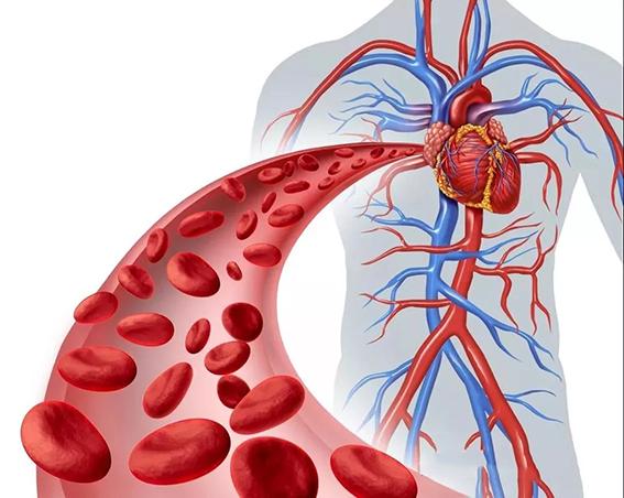 水蛭素血液血管