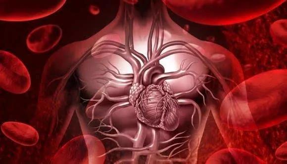 水蛭素、心脏病、心梗