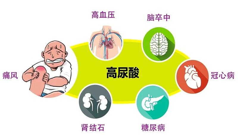 水蛭素、高尿酸、痛风