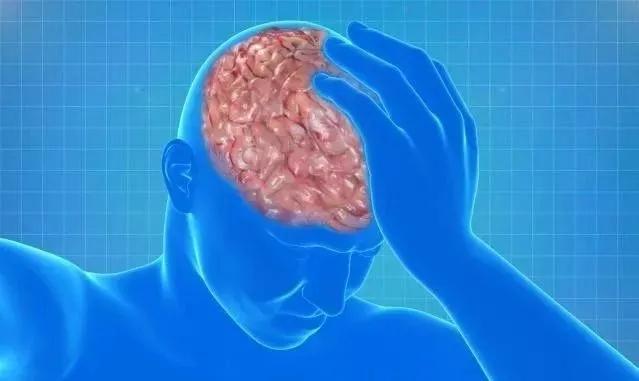 水蛭素、脑梗、血脂