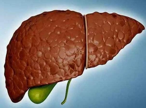 详解一些引起脂肪肝的原因