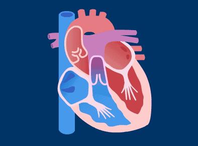 心跳的快慢会影响身体健康吗
