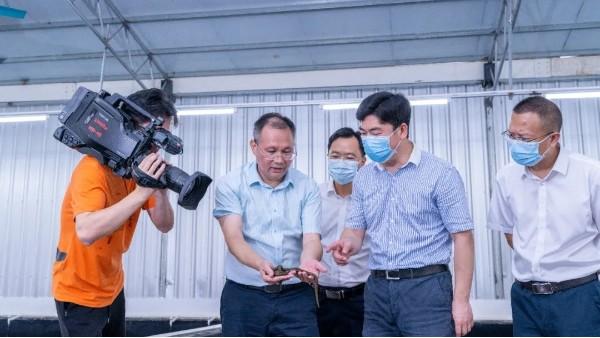 玉林市市长白松涛率队莅临科康集团陆川水蛭基地调研考察指导