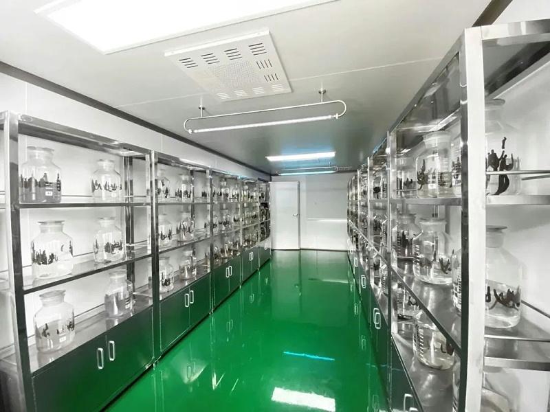 水蛭素、活体水蛭、广西国际壮医院
