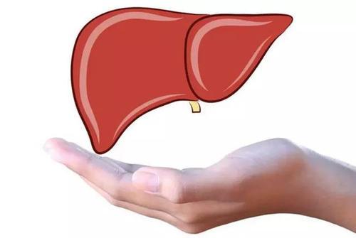这些坏习惯对肝的健康影响很大